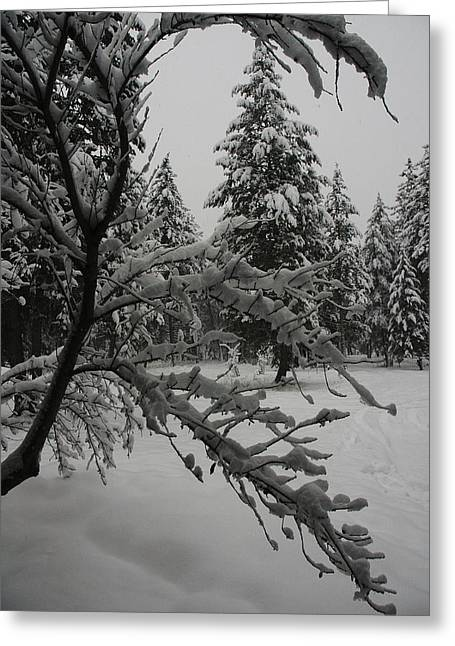 Montana Winter Greeting Card by G Humeston