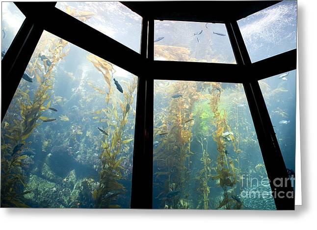 Monterey Bay Aquarium, Monterey, California, Ca Greeting Card by Paul Edmondson