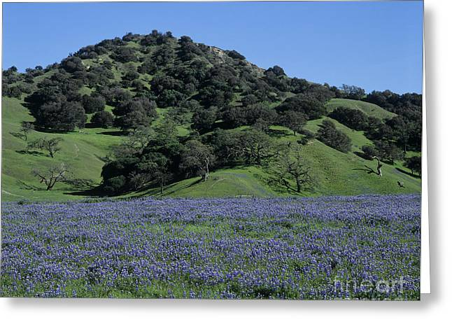 Monterey-county-t1-1 Greeting Card