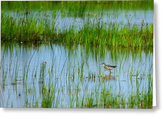 Montezuma National Wildlife Refuge Greeting Card by Paul Ge