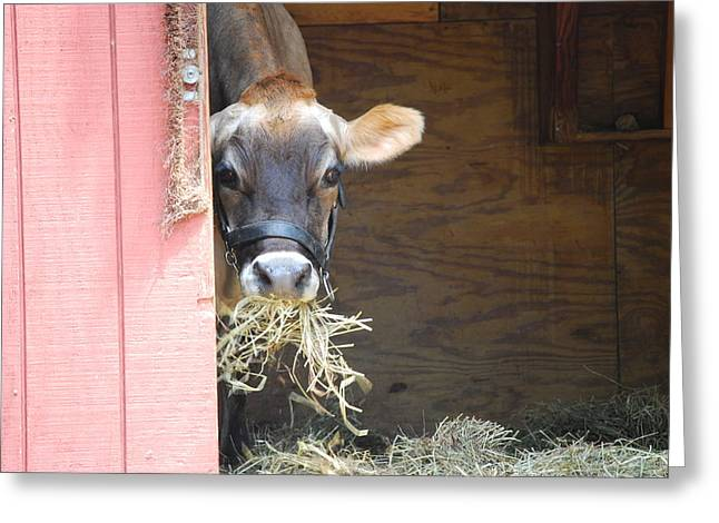 Moos Greeting Cards. Greeting Cards - Moo Now Greeting Card by Kathy Gibbons