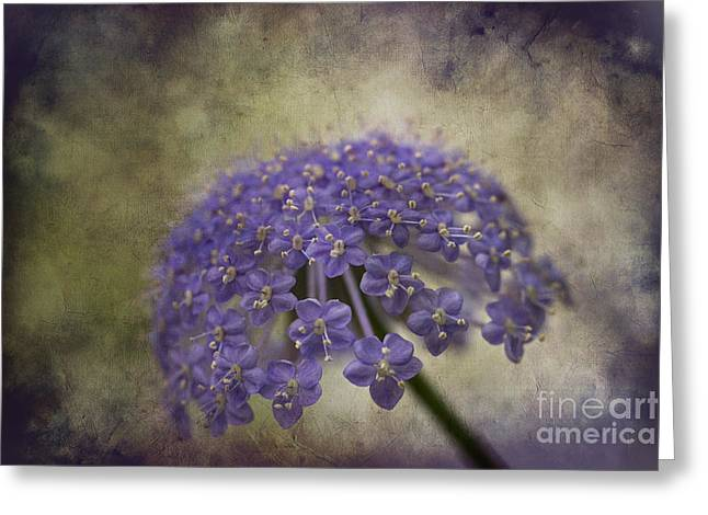 Moody Blue Greeting Card by Clare Bambers