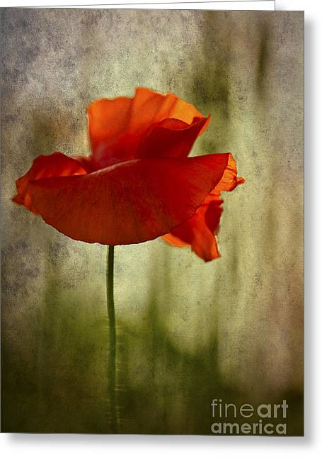 Moody Poppy. Greeting Card by Clare Bambers - Bambers Images