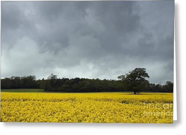 Moody Rapeseed Field Greeting Card by Urban Shooters