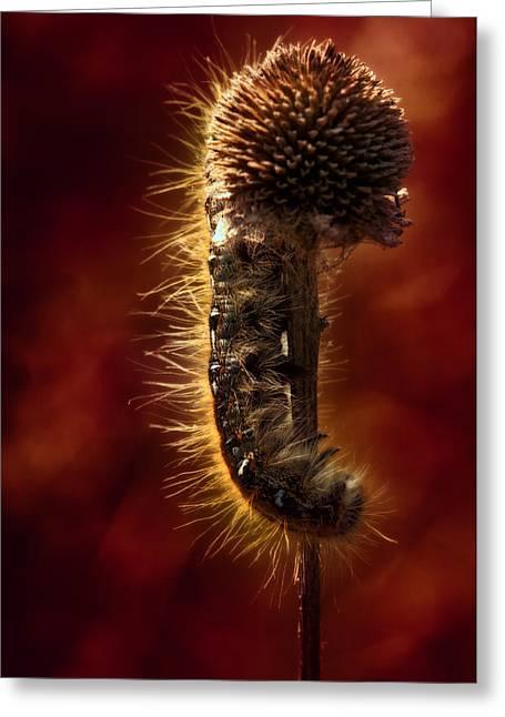 Moody Red Tent Caterpillar Greeting Card by Bill Tiepelman