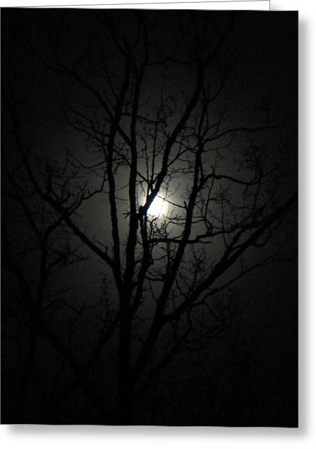 Moon Branches Greeting Card by Jennifer Compton