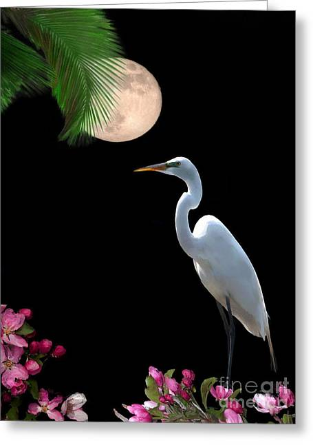 Moon Over Florida Greeting Card by Betty LaRue