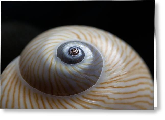 Moon Shell Greeting Card by Carol Leigh