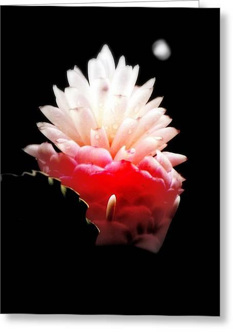 Moonlight Glow Greeting Card by Karen Wiles