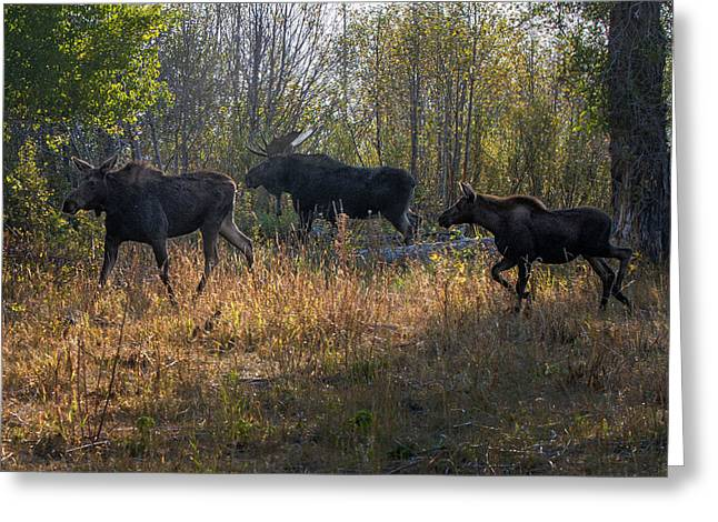 Moose Family Greeting Card