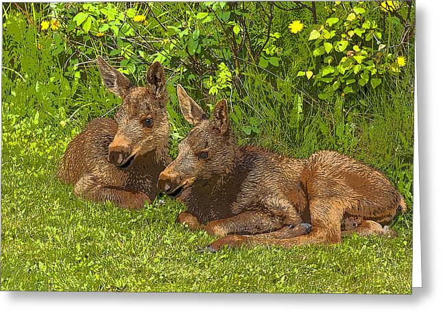 Moose Twins- Abstract Greeting Card by Tim Grams