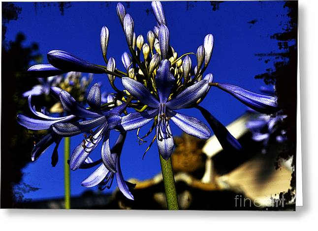 Greeting Card featuring the photograph Morning Blooms by Clayton Bruster