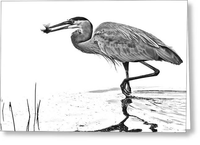 Morning Catch Greeting Card by Don Durfee