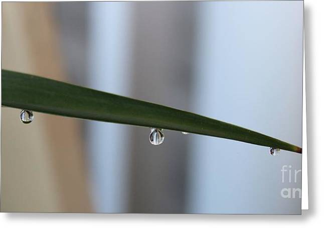 Morning Dew 2 Greeting Card by Lorraine Louwerse