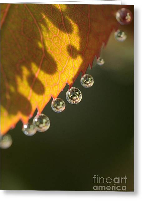Morning Dew Drops Greeting Card