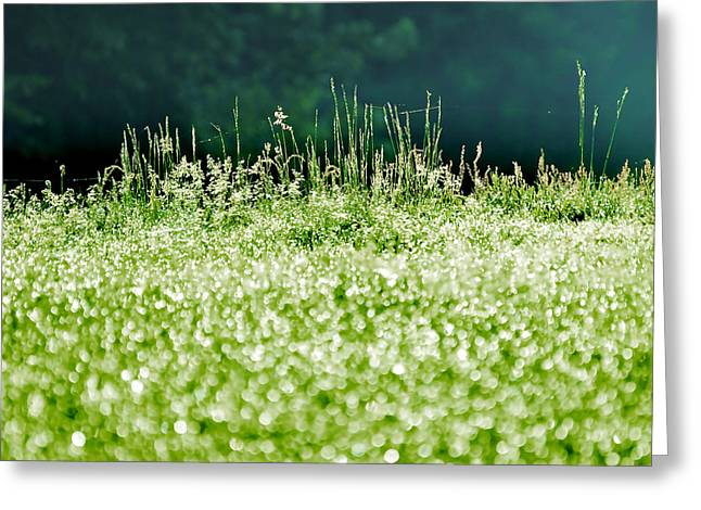 Morning Dew Greeting Card by HD Connelly