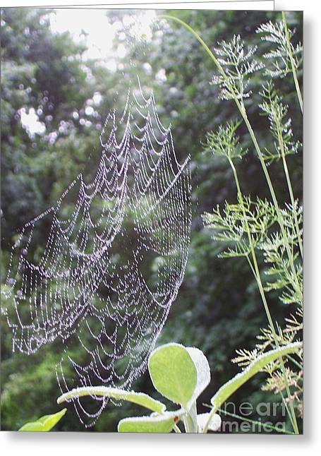 Morning Dew Greeting Card by Michelle Welles
