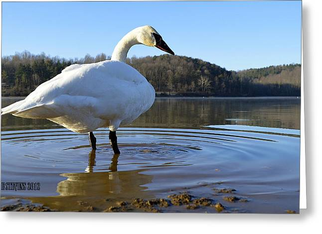 Greeting Card featuring the photograph Morning Dip by Brian Stevens
