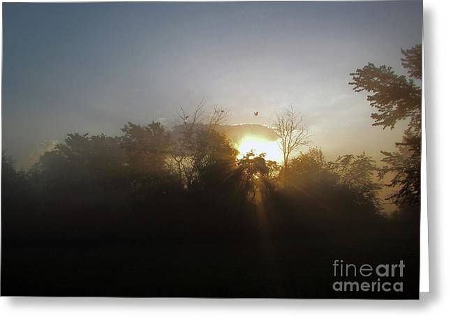 Morning Flight 1 Greeting Card by Cedric Hampton