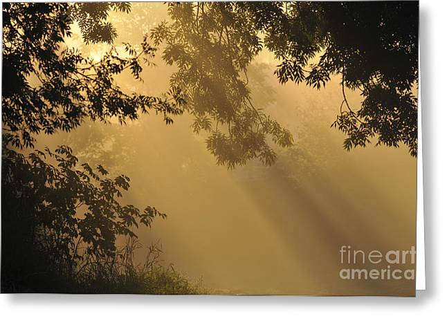Morning Fog Greeting Card by Sharon Talson
