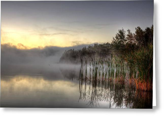 Morning Fog With A Loon Greeting Card by Gary Smith