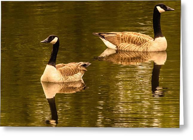 Morning Geese  Greeting Card by Ken Beatty