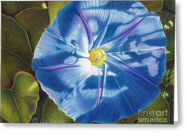 Morning Glory B Greeting Card