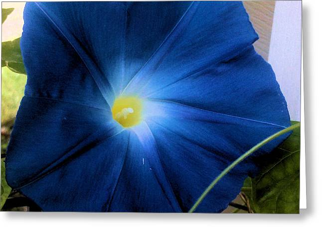Morning Glory Blue Greeting Card