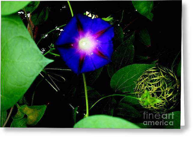 Morning Glory Glory Greeting Card by Marilyn Magee
