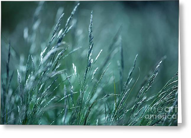 Morning Grass Greeting Card by Gabriela Insuratelu