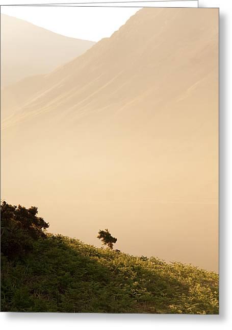 Morning Haze Greeting Card by Svetlana Sewell