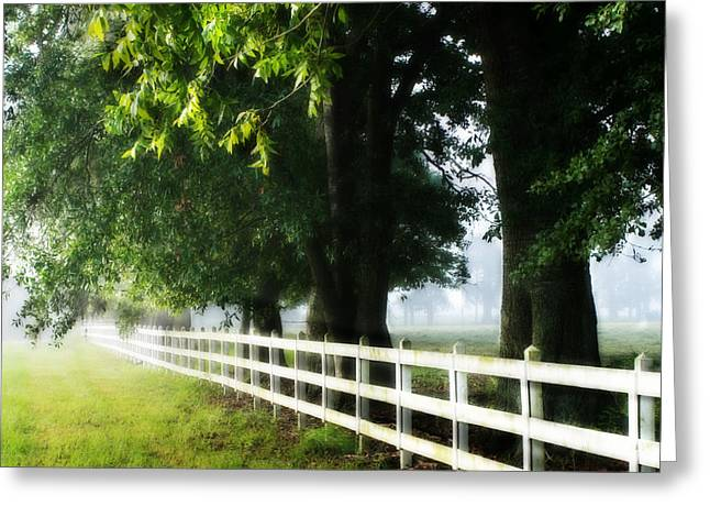 Morning Light Greeting Card by Mary Hershberger