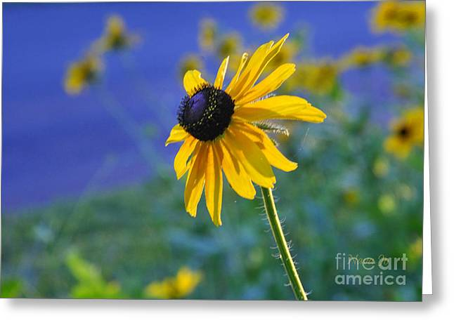 Greeting Card featuring the photograph Morning Light by Nava Thompson