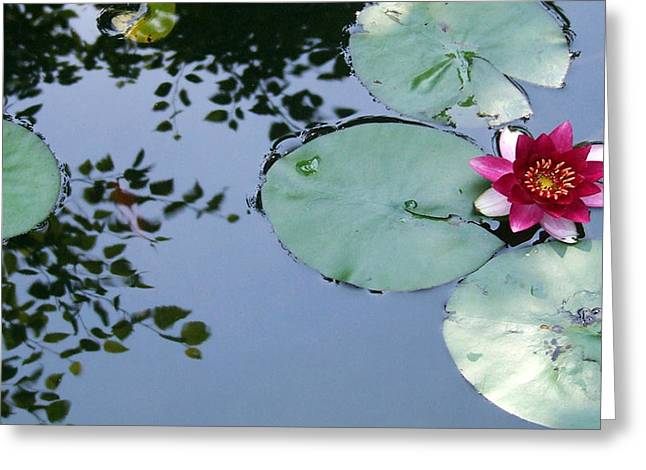 Morning Lilly Greeting Card