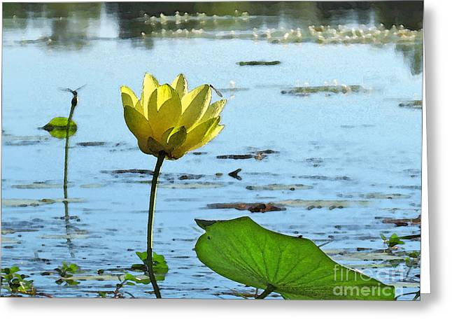 Greeting Card featuring the photograph Morning Lotus Pond by Deborah Smith