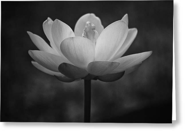 Morning Lotus Greeting Card by Scott Pellegrin