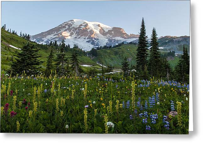 Morning Meadow Greeting Card by Mike Reid
