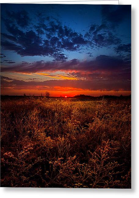 Morning Meditation Greeting Card by Phil Koch