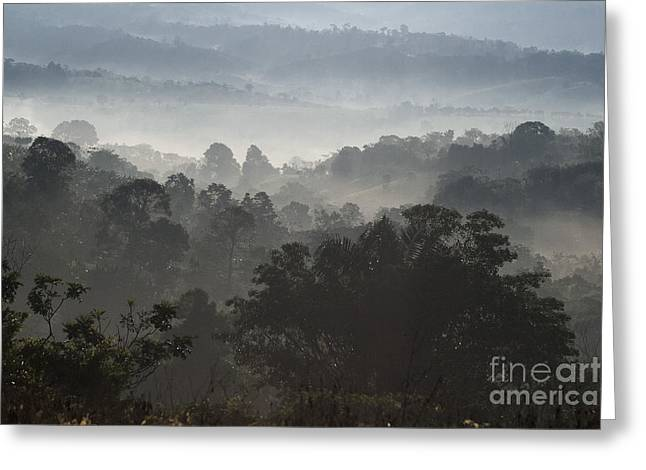 Morning Mist In Panama's Highlands Greeting Card by Heiko Koehrer-Wagner