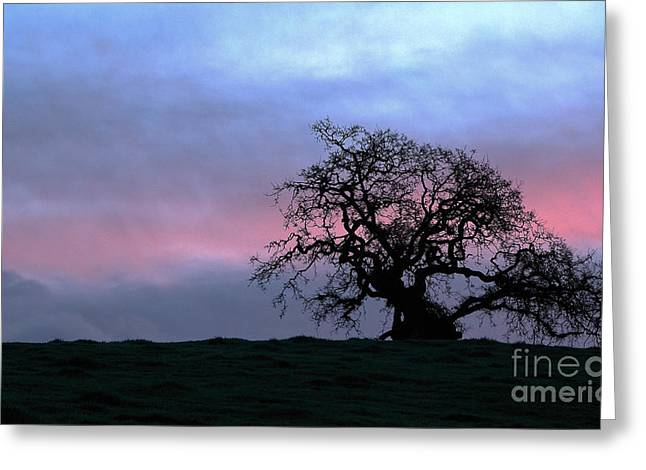 Morning Oak Greeting Card by Daniel Ryan