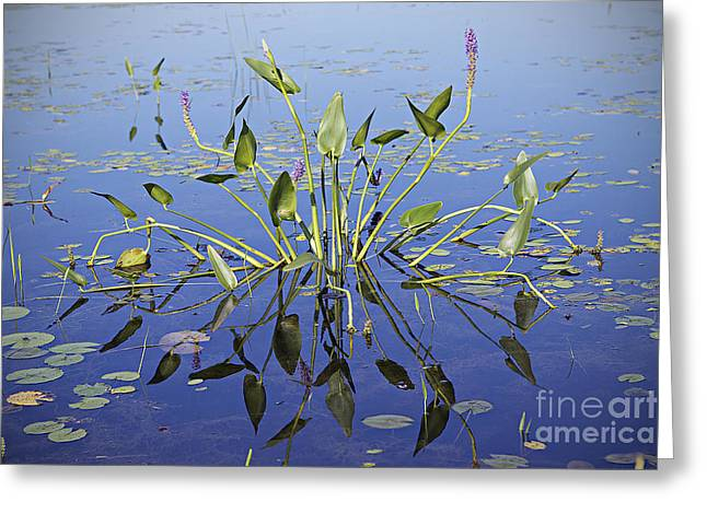 Greeting Card featuring the photograph Morning Reflection by Eunice Gibb