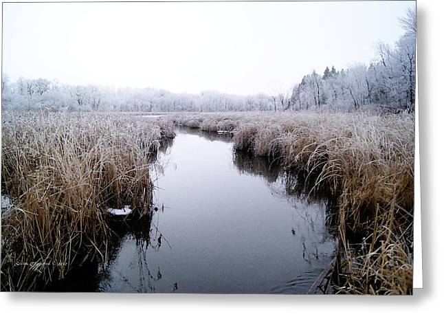 Greeting Card featuring the photograph Morning Rime by Steven Clipperton