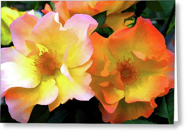 Morning Roses Greeting Card