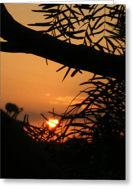 Greeting Card featuring the photograph Morning Sun And Mesquite by Louis Nugent