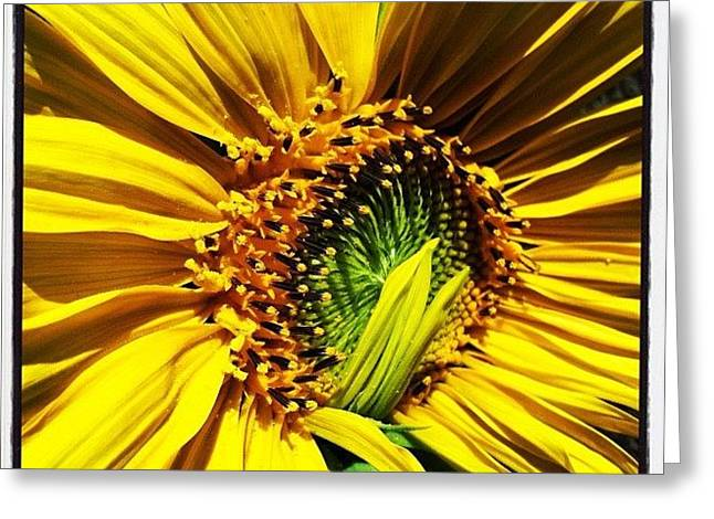 Morning Sun Greeting Card by Gwyn Newcombe