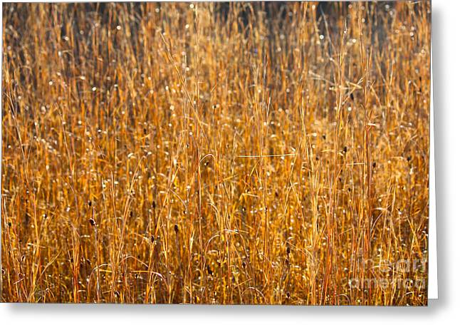 Morning Sunshine On The Marsh Greeting Card by Carol Groenen