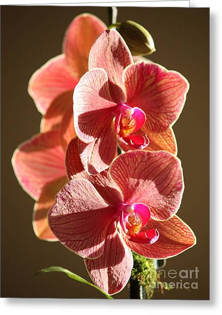 Morning Sunshine Orchids Greeting Card