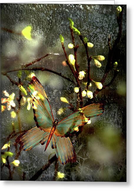 Morning's Moth On Apple Blossom Greeting Card by Li   van Saathoff