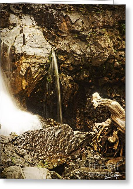 Greeting Card featuring the photograph Morrell Falls 3 by Janie Johnson