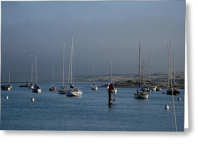 Morro Bay Boats Greeting Card by Kathy Long